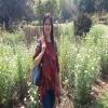 rashmisharma