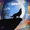 Nnightwolff