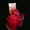 Hamida98