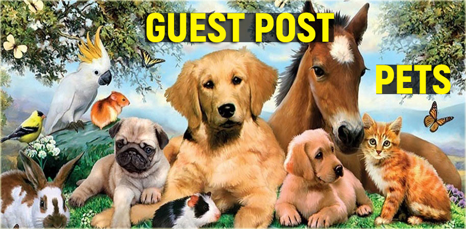 Publish a Guest Post on Pets Blog