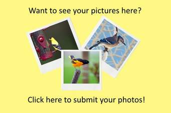 Guaranteed Image Submission to High PR Sites with High Quality Backlinks