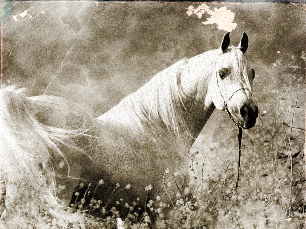 I can age your photographs to black and white or sepia