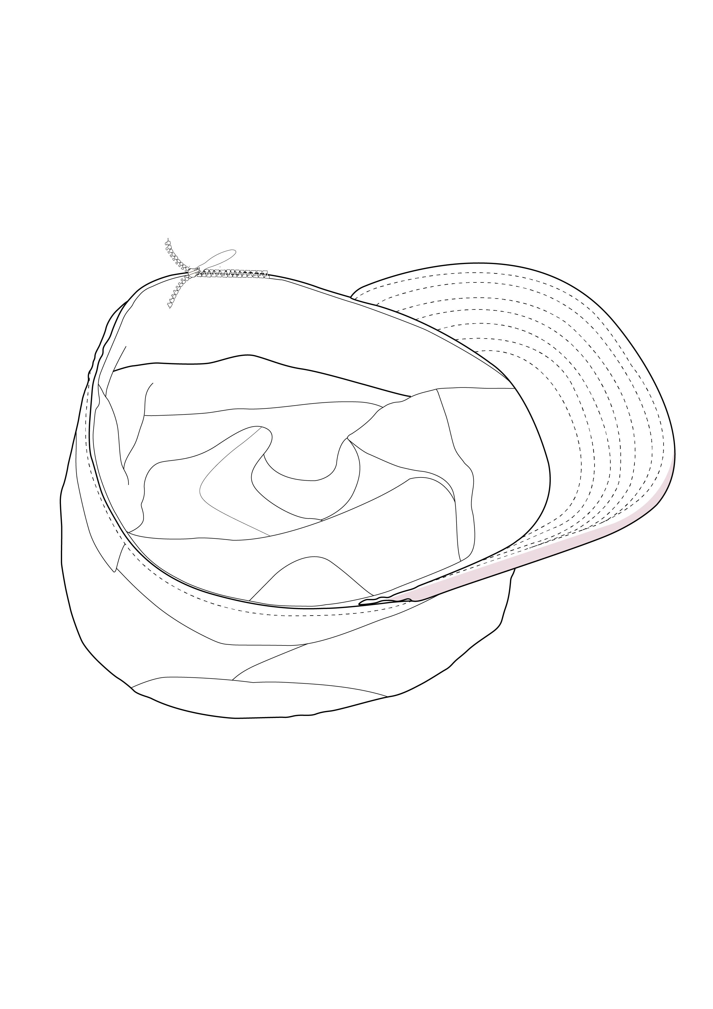 I will create super stunning line art illustration