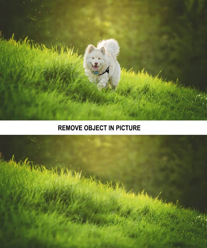 I WIll Remove Object /Edit/Replace Object in 2 Photos in One Hours