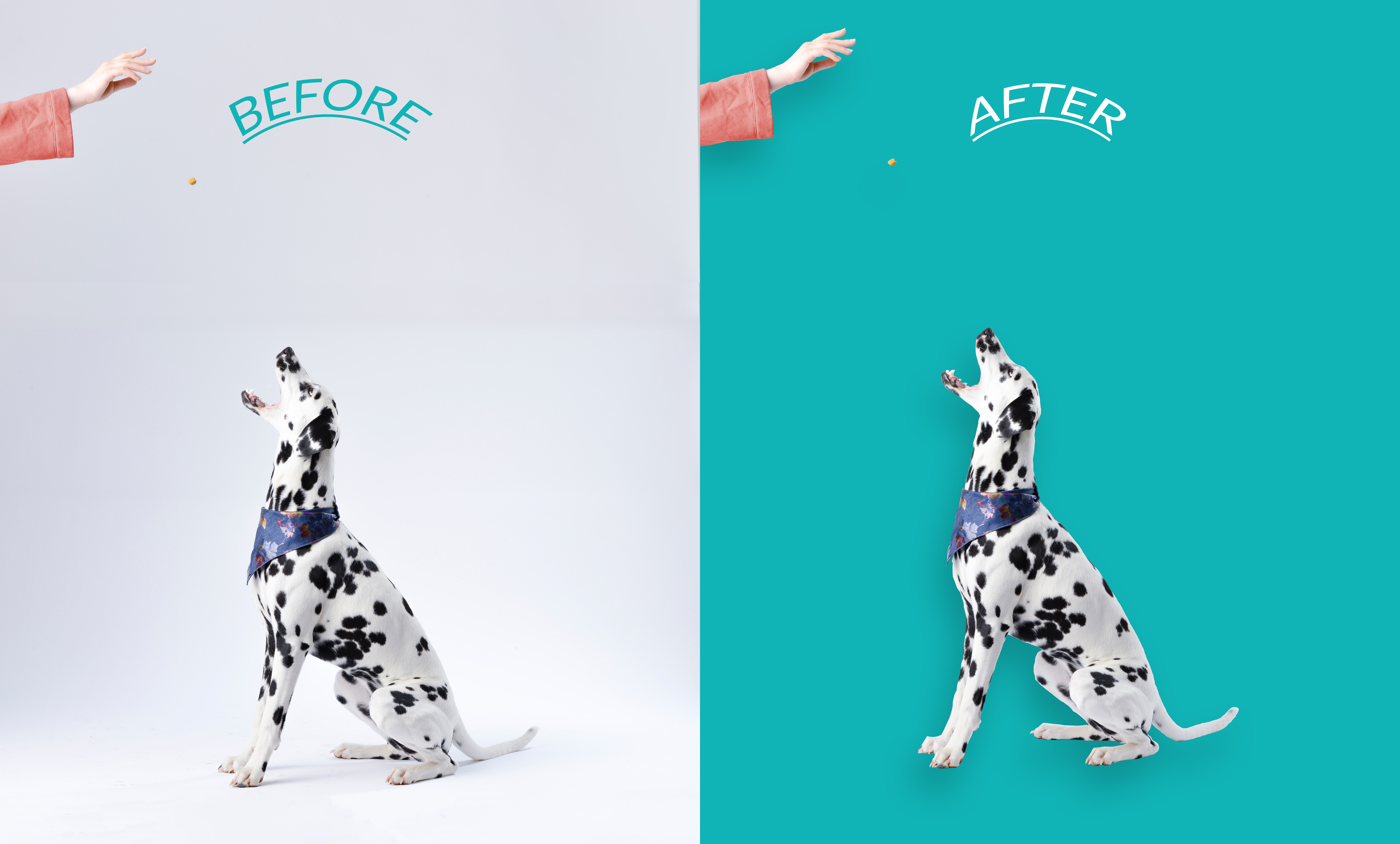 I will remove 15 photos background and cut out images professionally