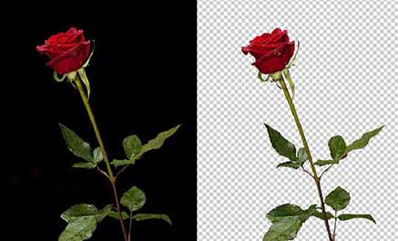 I will do clipping path & remove background