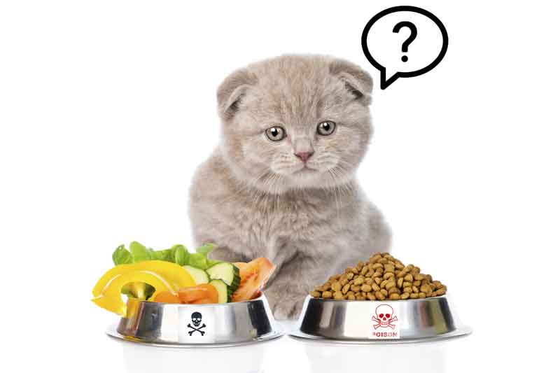 8 Human Food you should not feed your cat article +1000 word