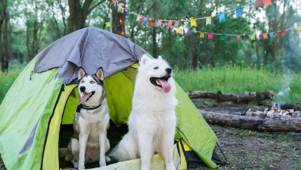this article about camping with dog