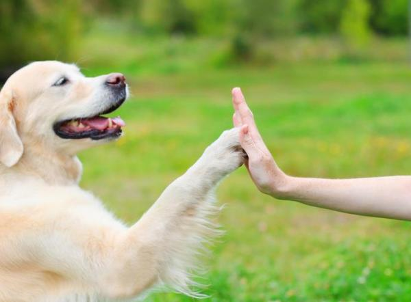 A new article with more than 600 words talking about how to communicate basic feelings to your dog
