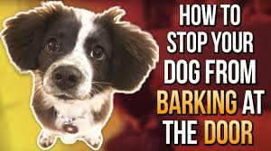 500 words to know how to stop dog from barking in the door