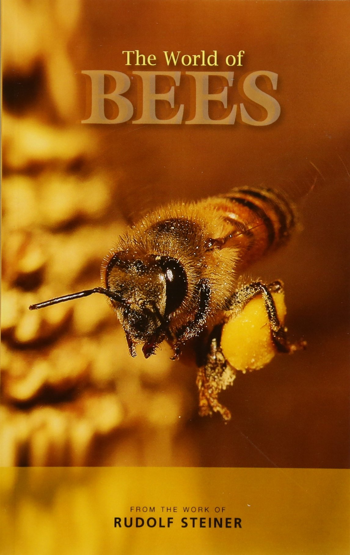 an article contains 500 words about The Bee - Nature's Perfect Creature
