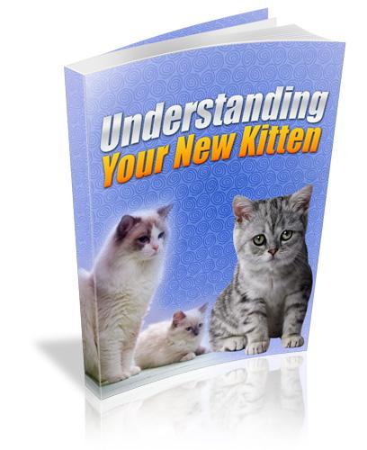 Understanding Your New Kitten PLR