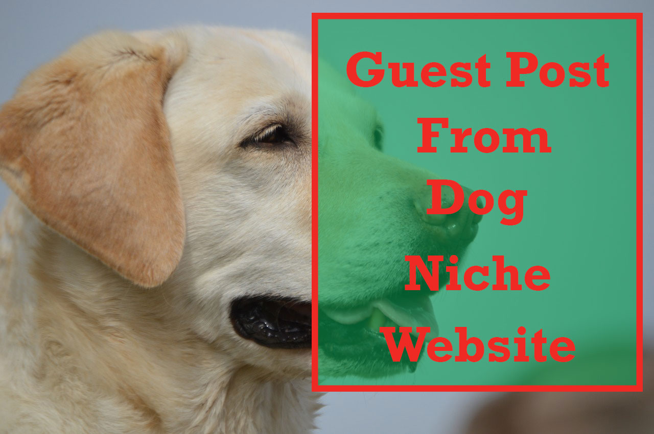 Two High Quality Dog Niche Guest Post