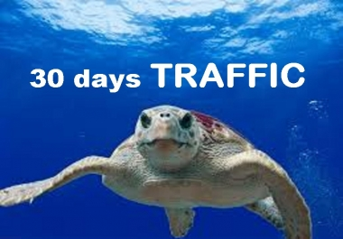drive 30 days unlimited visitors traffic hits to your shop STORE extras