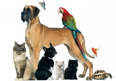 Write 500+ words SEO blogs and articles about dogs, cats and all pets
