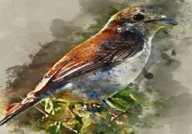 Turn 2 photos into a professional watercolor artwork