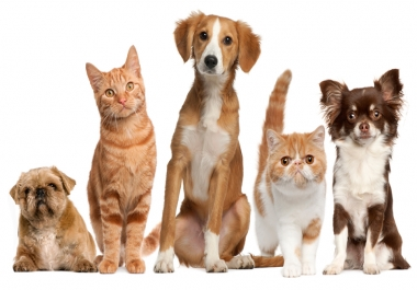 I need Guest Post Link Building Relating Pet,  Dog and Cat Blog.